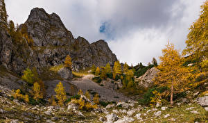 Picture Autumn Slovenia Alps Cliff Trees Julian Alps