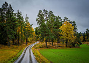 Photo Autumn Sweden Stockholm Roads Fields Trees Skalhamra Nature