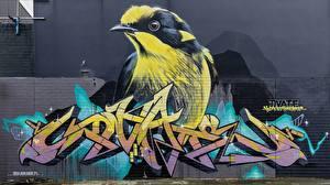 Pictures Bird Graffiti Walls