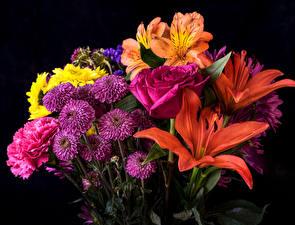 Image Bouquets Asters Lilium Rose Alstroemeria Black background Flowers