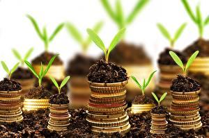 Images Coins Money Plants Soil