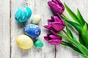 デスクトップの壁紙、、復活祭、チューリップ、卵、花