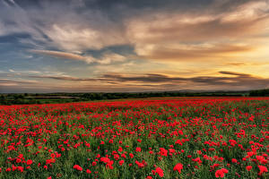 Wallpapers England Fields Sunrise and sunset Poppies Sky County Durham Nature