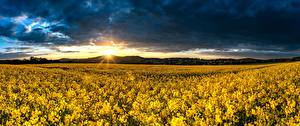 Pictures Fields Sunrises and sunsets Germany Rapeseed Sun Saxony, Upper Lusatia