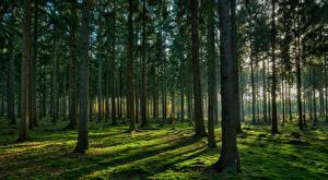 Fotos Wald Bäume Laubmoose Natur