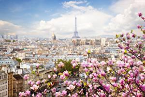 Wallpaper France Spring Flowering trees Paris Eiffel Tower Cities