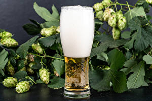 Photo Humulus Beer Highball glass Foam Food