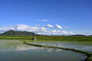 Pictures Japan Fields Horizon Rice field, Yamada, Iwate Prefecture