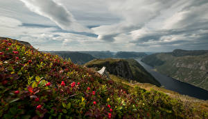 Picture Norway Mountains Landscape photography Berry Clouds Rogaland
