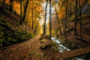 Pictures Switzerland Autumn Forests Streams Trees Leaf