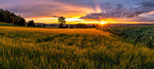 Pictures Switzerland Fields Sunrises and sunsets Landscape photography Horizon Sun Rays of light Frauenfeld