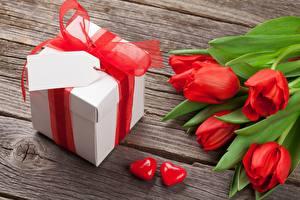 Bilder Tulpen Blumen