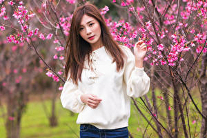 Pictures Asiatic Flowering trees Brown haired Sweater Glance Blurred background Girls