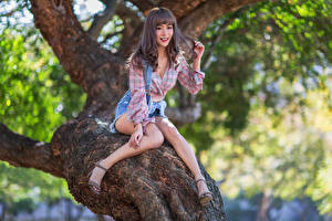 Photo Asian Smile Sit Trunk tree Legs Shorts Formal shirt young woman