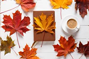 Pictures Autumn Coffee Leaf Acer Nature