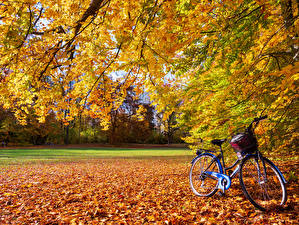 Pictures Autumn Leaf Bicycle Branches Nature