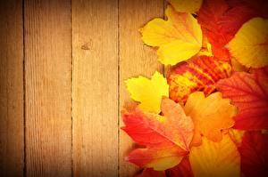 Hintergrundbilder Herbst Blatt Bretter Natur