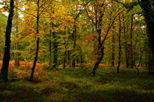 Images Autumn Forests Trees Nature