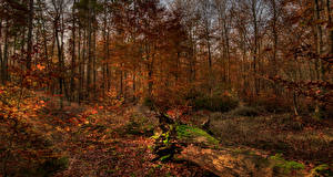 Pictures Autumn Forests Trees Leaf Nature