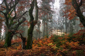 Images Autumn Forest Trees Leaf Nature