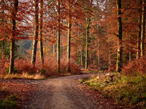 Pictures Autumn Forest Trees Path Wood log Foliage