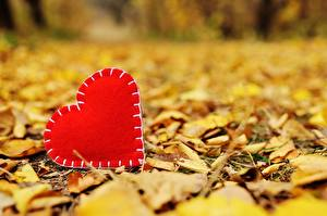 Photo Autumn Valentine's Day Heart Foliage Blurred background Nature