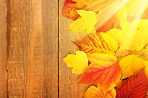 Image Autumn Wood planks Foliage Template greeting card Nature