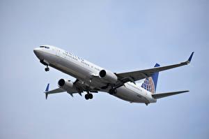 Hintergrundbilder Boeing Flugzeuge Verkehrsflugzeug 737, United Airlines
