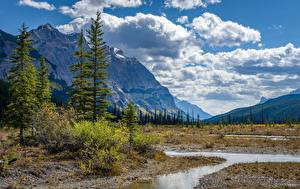 Pictures Canada Mountains Scenery Trees Stream Rocky mountains, Alberta Nature