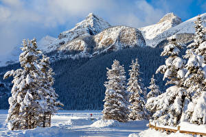 Image Canada Winter Parks Mountains Banff Spruce Snow Nature