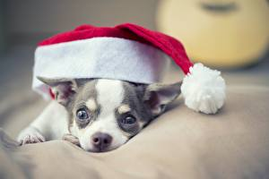 Picture Dog Christmas Winter hat Animals