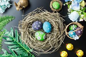 Photo Easter Egg Nest