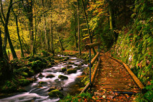 Image Germany Autumn Forests Stones Bridge Stream Moss Black Forest Nature