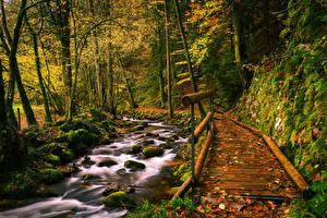 Bilder Deutschland Herbst Wälder Steine Brücke Bach Laubmoose Black Forest