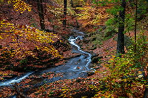 Images Germany Dresden Autumn Park Stone Foliage Creek Branches Nature