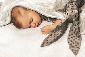 Fonds d'écran Lièvres Bébé Dormir Enfants images