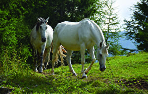 Pictures Horse Grass 2 Animals