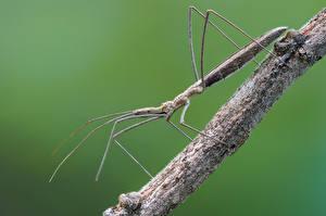 Tapety na pulpit Insekty Z bliska Kolorowym tle assassin bug Zwierzęta