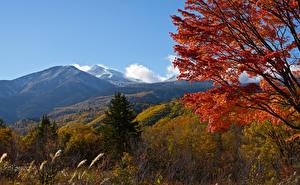 Photo Japan Mountain Autumn Branches Spruce Mount Norikura Nature