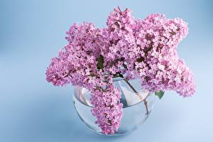 Wallpapers Syringa Bouquet Branches Vase flower