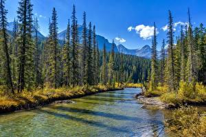 Image Park Forests River Canada Jasper Park Alberta Nature
