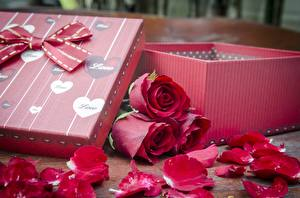 Desktop wallpapers Roses Box Bow knot Red Petals flower