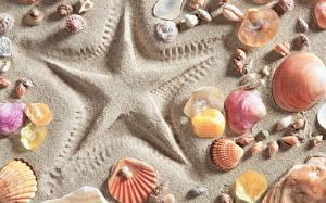 Hintergrundbilder Muscheln Nahaufnahme Sand