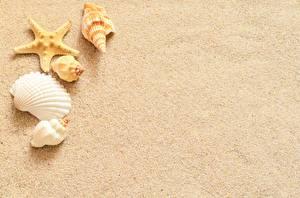 Image Shells Sea stars Template greeting card Sand