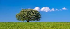 Photo Sky Grasslands Trees Clouds Grass Nature