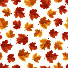Wallpaper Texture Maple Foliage White background Nature