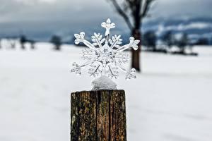 Wallpaper Winter Blurred background Tree stump Snowflakes Ice