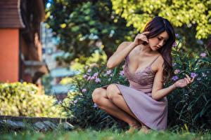 Sfondi desktop Asiatico Abito In posa Sedute Bokeh giovani donne