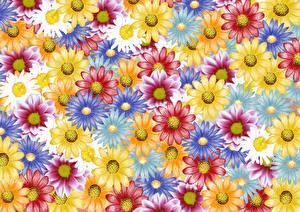 Papel de Parede Desktop Bellis Desenhado Multicolor
