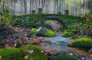Pictures Bridge Stone Autumn Moss Foliage Streams